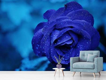 Photo Wallpaper The blue rose