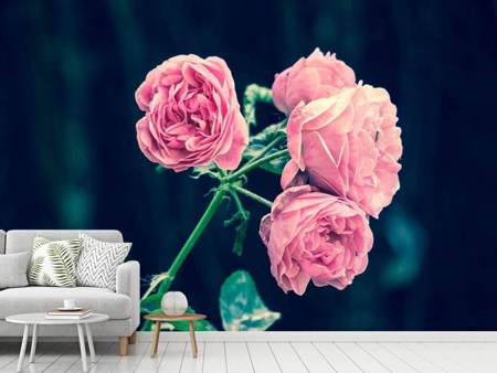 Photo Wallpaper Beautiful pink roses
