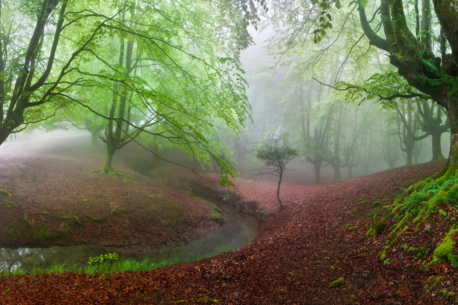 Fototapete The Forest Maravillador Iii