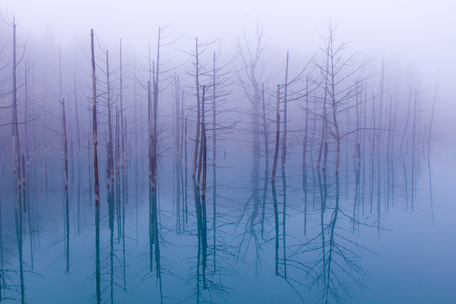 Fotomurale Misty Blue Pond