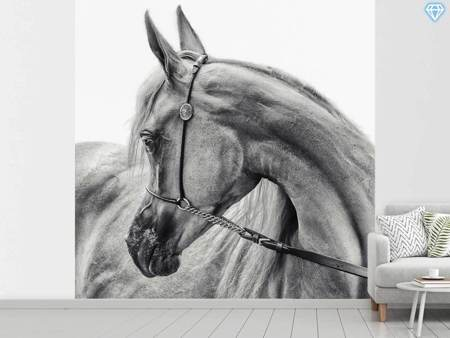 Fotobehang The Arabian Horse
