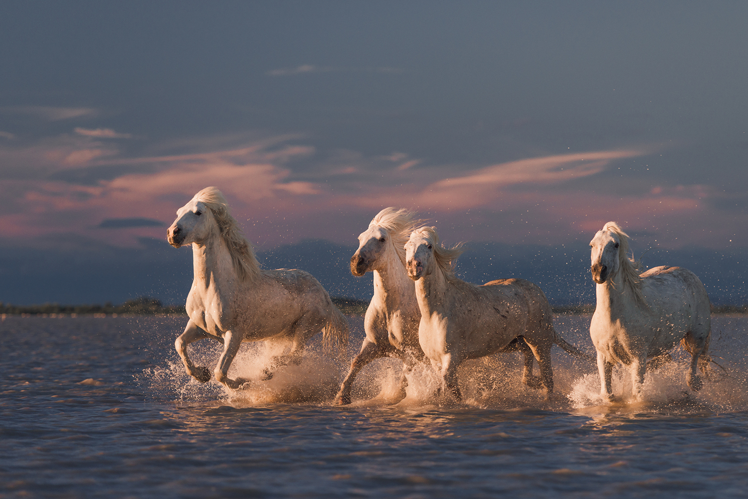 Fototapete Angels Of Camargue