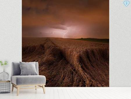 Photo Wallpaper Morning Storm
