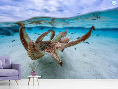 Photo Wallpaper Octopus II