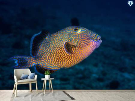 Papier peint photo Blue Triggerfish