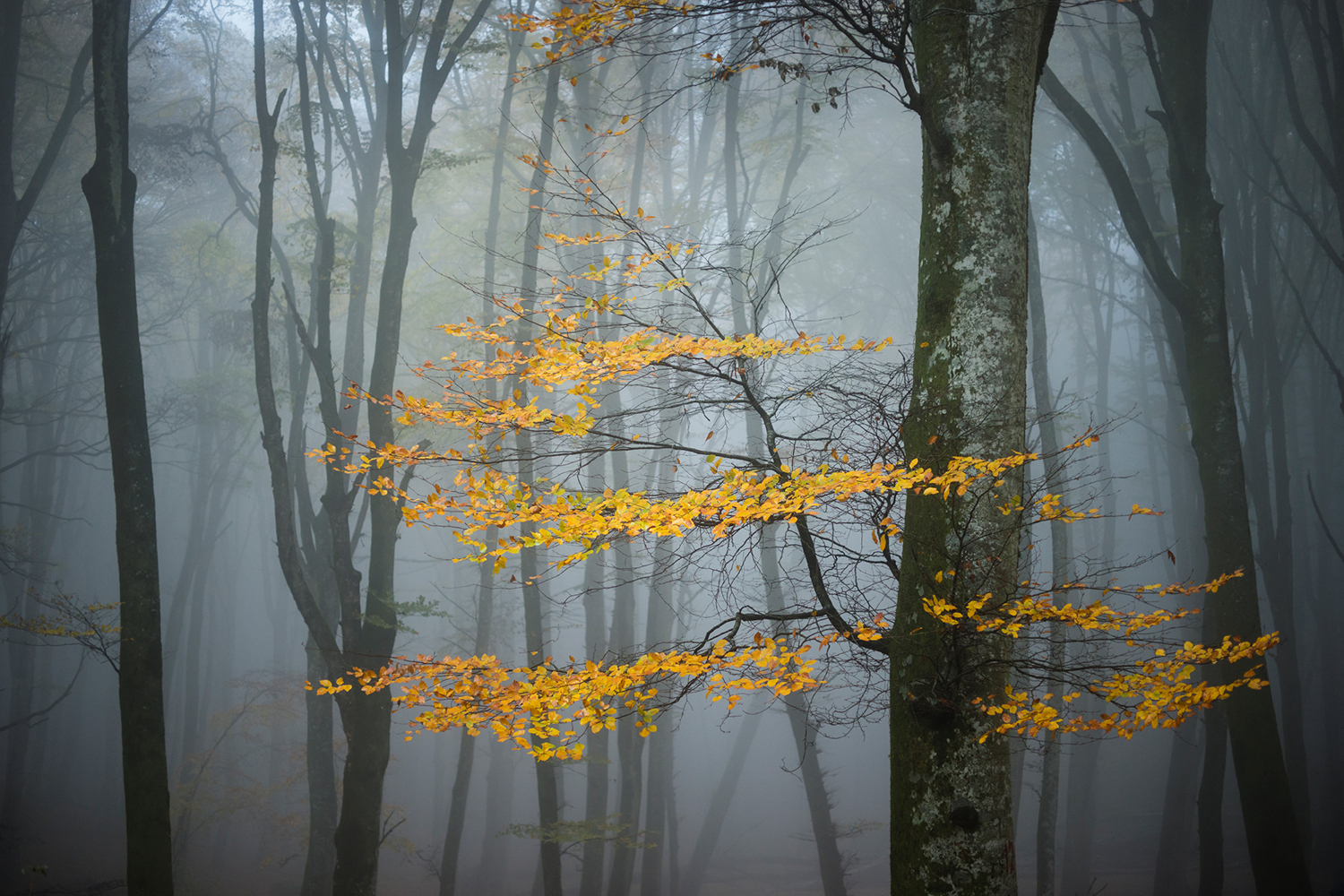 Fotomurale Beech Forest In Autumn