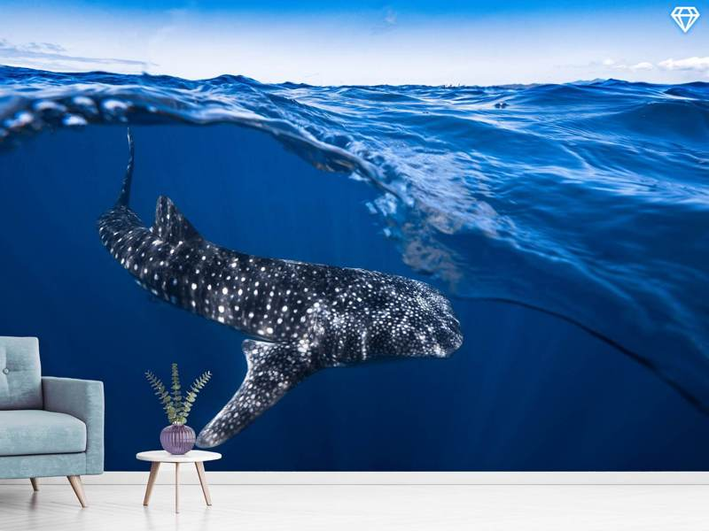 Fotomurale Whale Shark On Split Level