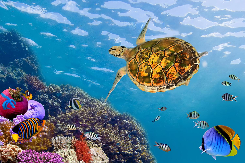 Fototapete Die Wasserschildkröte