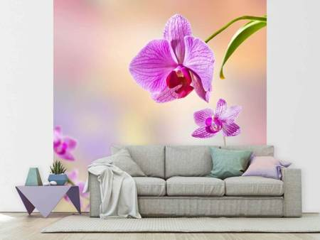 Fototapet Romantic Orchids