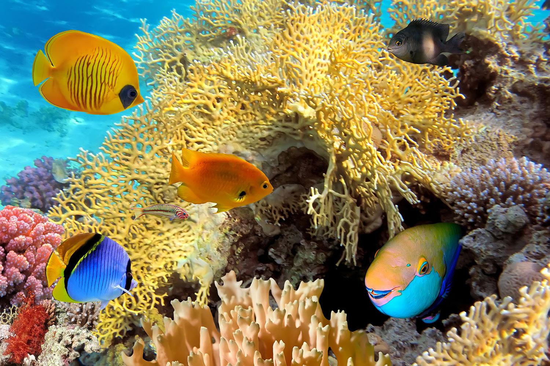Fototapete Fischreichtum