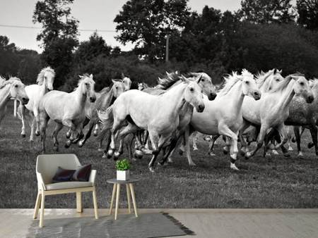 Photo Wallpaper The Mustang Herd