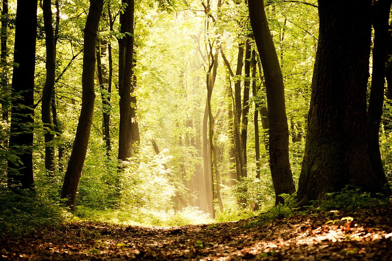 Fototapete Sonnenaufgang im Wald