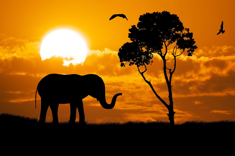 Fototapete Verträumtes Afrika
