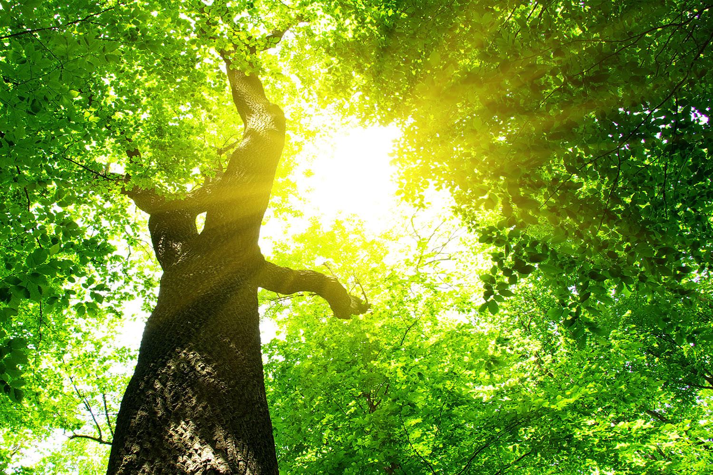 Fototapete Baum