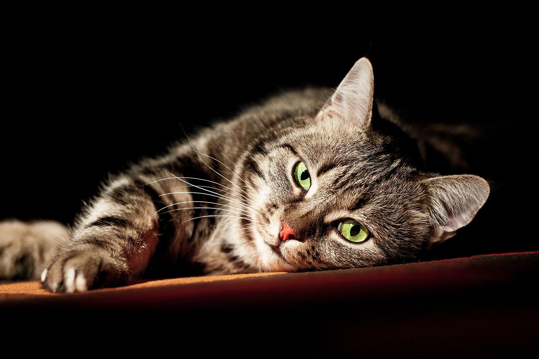Fototapete Entspannte Katze