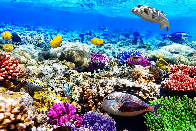 Fototapete Fischaquarium