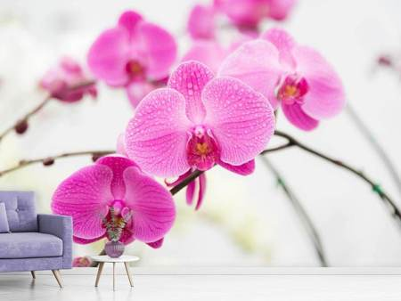 Fototapet The Symbol Of Orchid