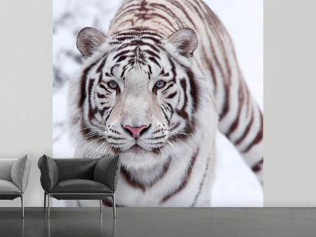 Fotobehang The King Tiger