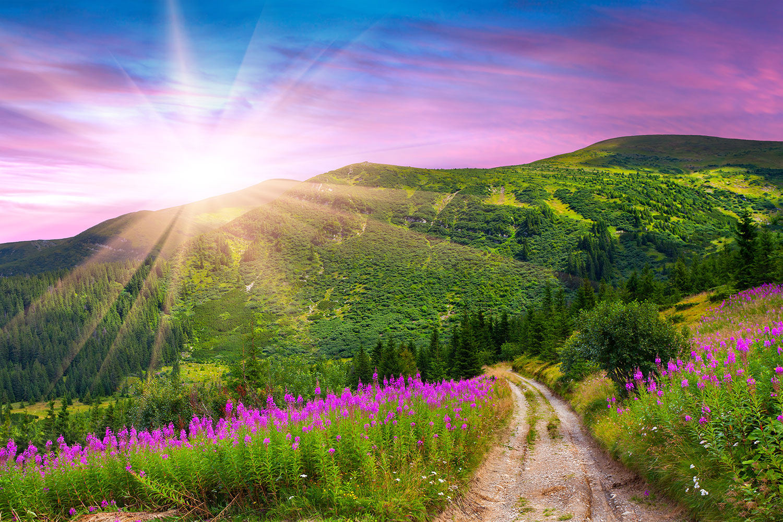 Fototapete Eine Sommerlandschaft bei Sonnenaufgang