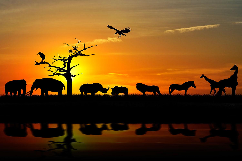 Fototapete Safarietiere bei Sonnenuntergang