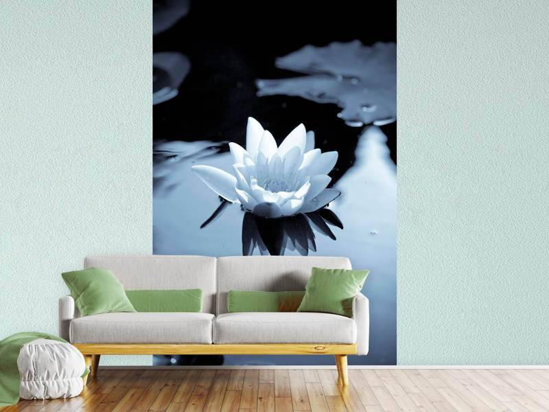 Photo Wallpaper Black And White Photograph Waterlily
