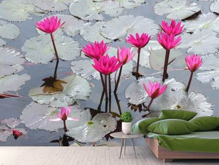 Photo Wallpaper Jump In The Lily Pond