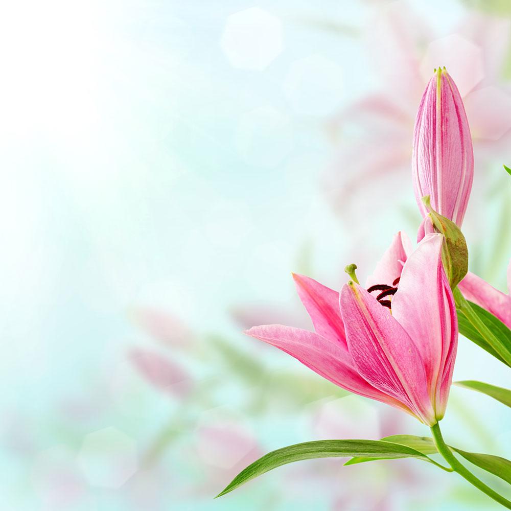 Fototapete Romantische Lilien