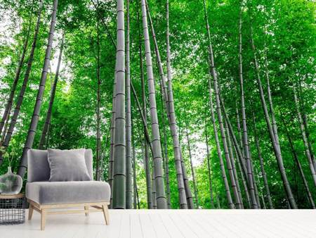 Photo Wallpaper Bamboo Forest