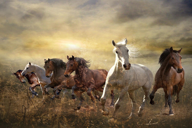 Fototapete Wilde Pferde