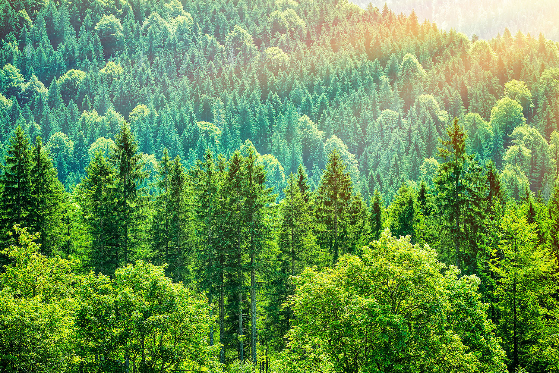 Fototapete Der Waldhügel