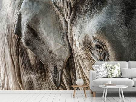 Photo Wallpaper Close Up Elephant