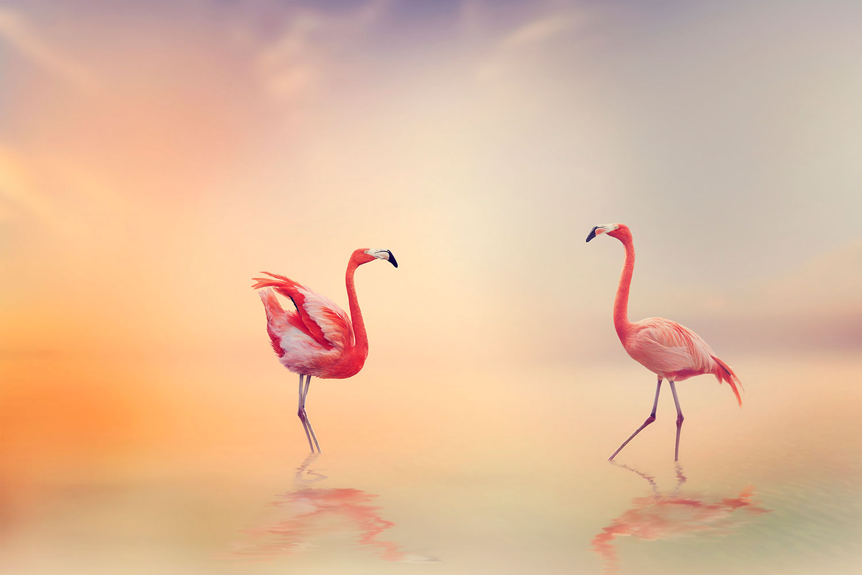 Fototapete Romantische Flamingos
