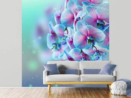 Fototapet Colored Orchids