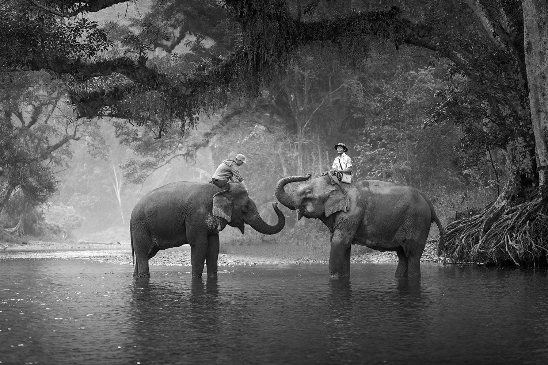 Fototapete Zwei Elefanten
