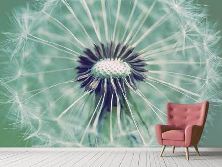 Photo Wallpaper Close Up Dandelion